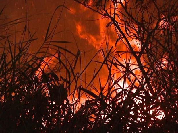Fogo atingiu mato e parte de canavial em estrada que liga Ribeirão a Jardinópolis (Foto: César Tadeu/EPTV)