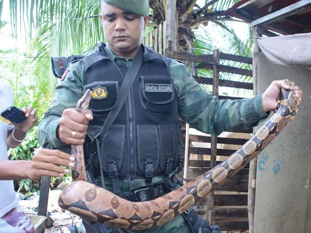 Polícia Ambiental capturou cobra no banheiro, em João Pessoa, e encaminhou para mata (Foto: Walter Paparazzo/G1)