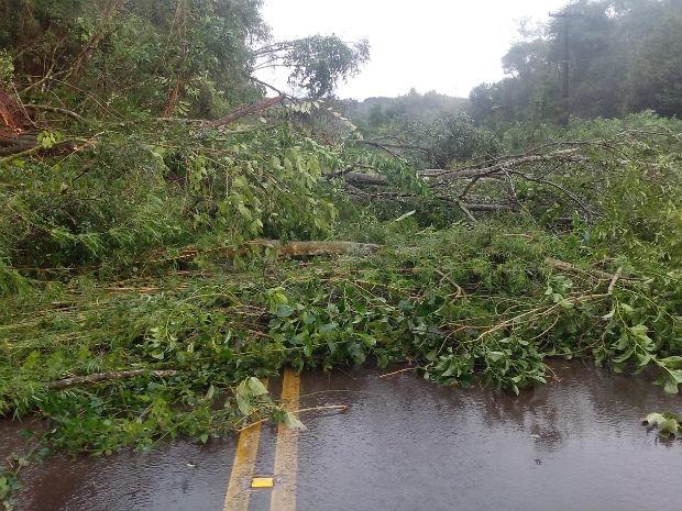 Interdições ocorrem em várias estradas do Paraná  (Foto: Alvaro de Araújo / VC no G1)