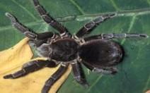 Ciência desvenda truque da aranha para saltar sobre presa