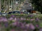 Árvores colocam avenida 'Afonso Pena' entre belezas de Campo Grande