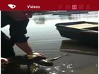 Tartaruga Marinha é resgatada por empresário no Canal de Vitória