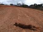 Raposa ameaçada de extinção morre atropelada na Serra da Canastra