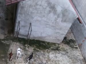 Animais estavam há um mês sem água e comida (Foto: Divulgação/Pata)