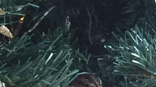 Família deixa de desmontar árvore de Natal até que tico-tico saia do ninho