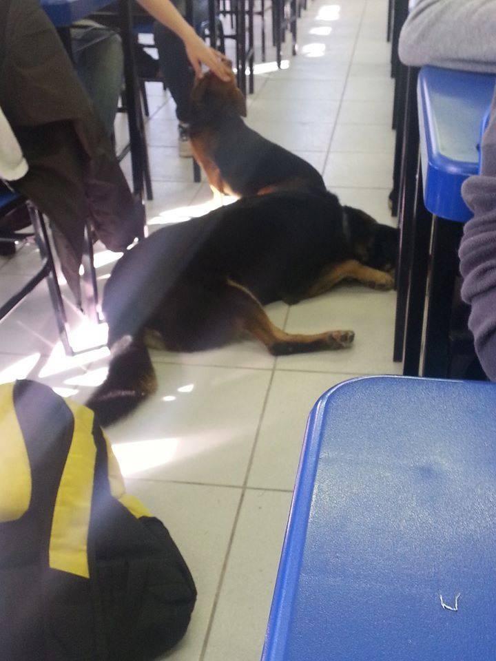 udescão assistia às aulas (Foto: Reprodução/Facebook UDESCÃO)