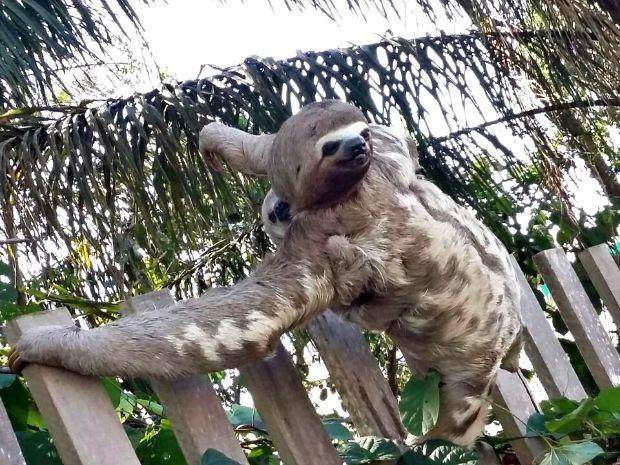 Animal estava acompanhado com o seu filhote quando foi fotografada  (Foto: Elizânia Dinarte/Arquivo pessoal )