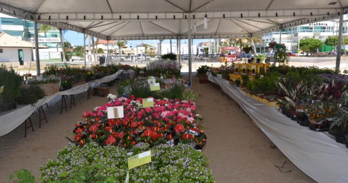 Mais de 150 espécies de flores são expostas em São Pedro da ... - Globo.com
