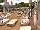Agentes de saúde combatem Aedes aegypti em cemitérios do Recife