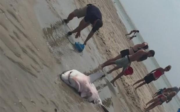 Banhistas mantiveram animal úmido enquanto ele era puxado de volta para o mar  (Foto: Reuters)