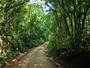 Serra do Japi protege espécies raras   e ameaçadas da Mata Atlântica