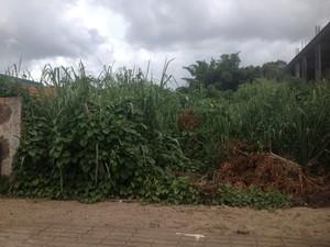 'Falsos' terrenos são vendidos como se fossem regularizados (Foto: Bruno Perez/G1)