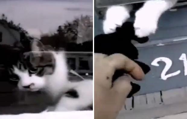 Gato 'valentão' briga com carteiro na hora de entregar as correspondências em sua casa (Foto: Reprodução/YouTube/cottonisking)