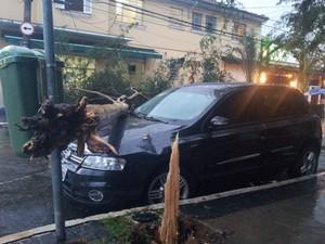 Árvore causou prejuízos a um carro na rua Guaimbé, Mooca, São Paulo (Foto: Eduardo Gomes Vieira/VC no G1)