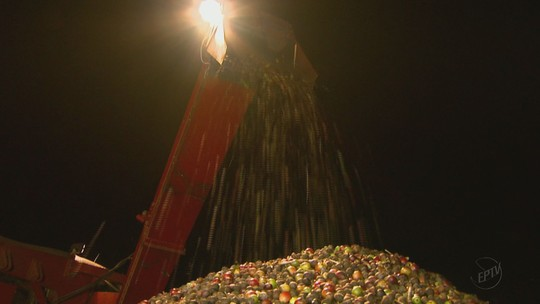 Período sem chuva estimula colheita de café durante a noite em Caconde, SP