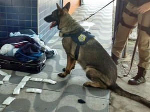 Cães vão auxiliar agentes da PRF nas fiscalizações (Foto: PRF-CE/Divulgação)