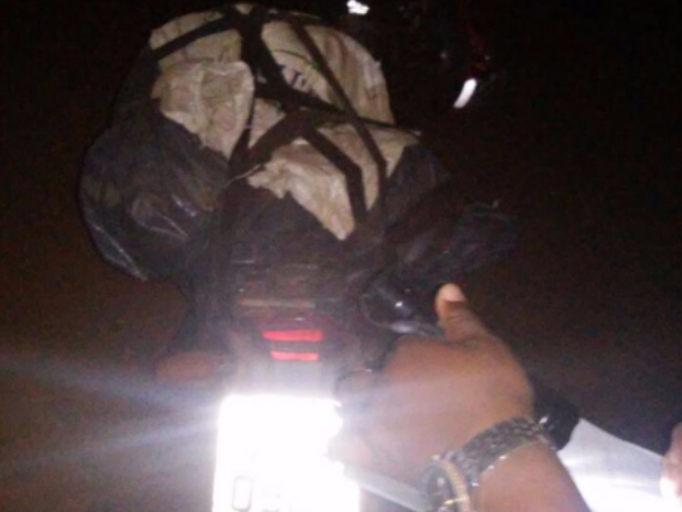 Animais eram transportados em uma moto, em Goiás (Foto: Divulgação/PM)