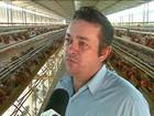 Em SP, calor faz a produção de ovos vermelhos cair e o preço sobe