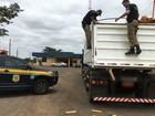 PRF apreende em MS 501 quilos de maconha que iriam para São Paulo