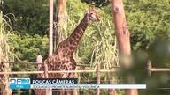 Segurança do Zoológico de Brasília é questionada