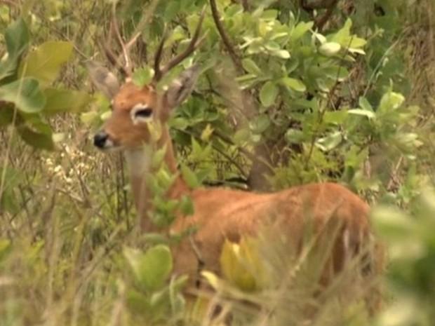 Sem funcionários, Parque Nacional das Emas é fechado para visitação em Goiás (Foto: Reprodução/TV Anhanguera)