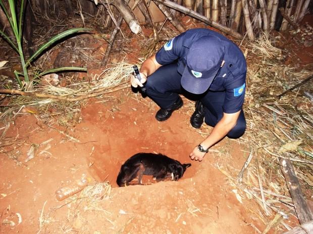 Cão foi encontrado dentro de um buraco em Botucatu (Foto: GCM de Botucatu/Divulgação)