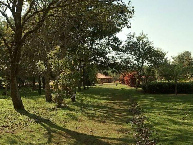 Mudas serão plantadas no parque ecológico de Pederneiras (Foto: Reprodução / TV TEM)