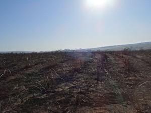 Área ficou destruída após incêndio em Lins (Foto: Divulgação / Defesa Civil de Getulina)
