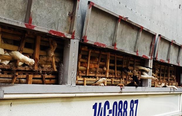 Motorista do caminhão pegou gatos na fronteira com a China  (Foto: STR/AFP)