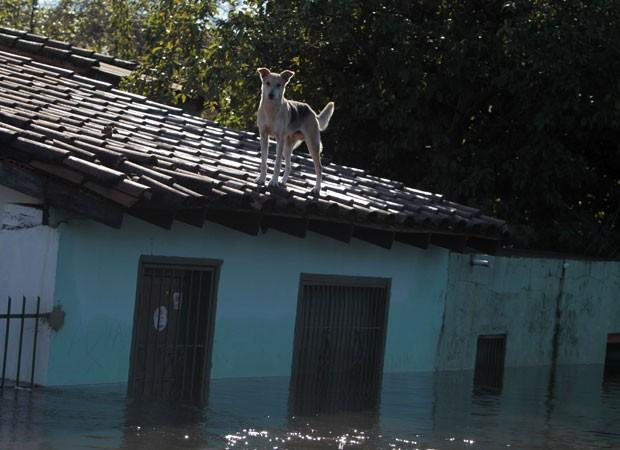 Cachorro é visto em telhado de casa alagada em Assunção, no Paraguai, nesta segunda-feira (30) (Foto: Jorge Adorno/Reuters)