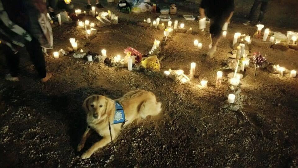 (Foto: LCC K-9 COMFORT DOGS/FACEBOOK)