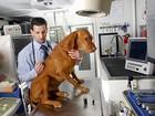 Veterinários nos EUA indicam maconha para animais doentes