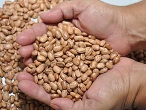 Serão distribuídas 595 toneladas de sementes (Foto: Divulgação/Governo do RN)