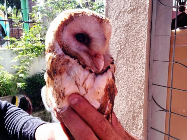 Animal foi encontrado por moradores de uma casa no bairro de Jaguaribe (Foto: Walter Paparazzo/G1)