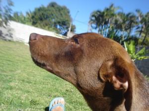 O cachorro Amendoim morreu contaminado por fungo em ração. (Foto: Dora Lúcia Frasson/ arquivo pessoal)