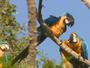 Terra da Gente mostra floresta preservada no Mato Grosso