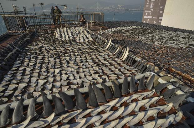 Hong Kong é considerada a capital da barbatana de tubarão (Foto: AFP)