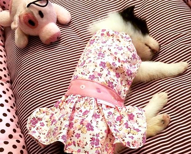 Amy tem apenas dois meses e já mostra muito estilo com vestidinho rosa (Foto: Arquivo pessoal)