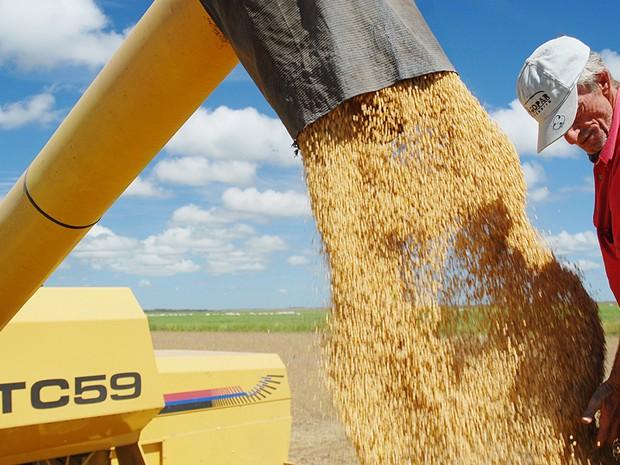 Soja é o principal produto agrícola do Tocantins (Foto: Divulgação/ATN)