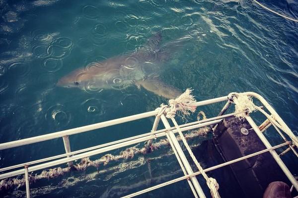 Foto que Phelps postou nas redes sociais em que diz que desejou um dos seus desejos ao mergulhar em gaiola em águas com tubarões (Foto: Reprodução/Instagram)