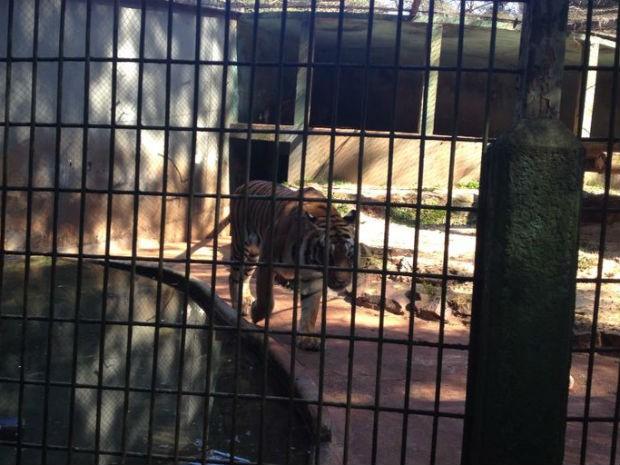 Pai do menino relatou que ele pediu para que o animal não fosse sacrificado  (Foto: Franciele John / G1)