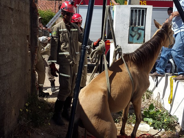 Cavalo caiu em buraco de aproximadamente dois metros de profundidade (Foto: Rivelino de Moura/Arquivo Pessoal)