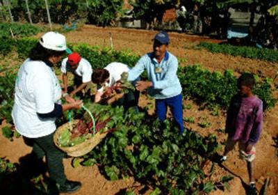 fazenda_sustentavel_agricultura (Foto: Divulgação)