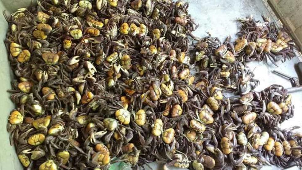 Polícia Ambiental apreendeu mais de dois mil caranguejos-uçá na Paraíba em 2017 (Foto: Comunicação Social/BPAmb)