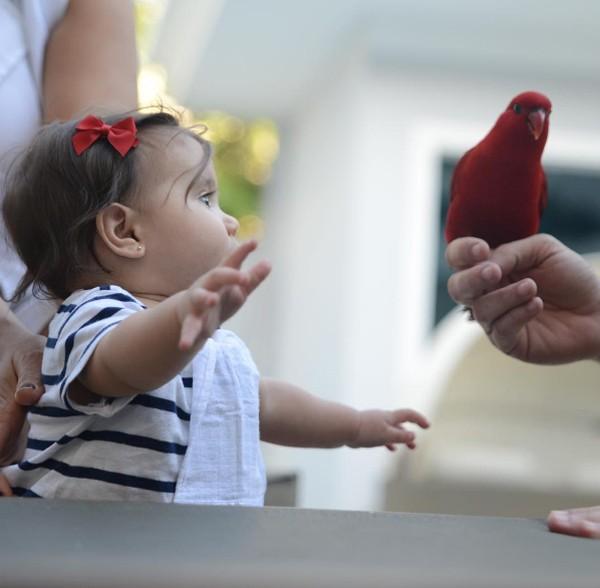 Filha de Deborah Secco, Maria Flor brinca com pássaro; veja foto (Foto: Reprodução / Instagram)