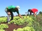 Agricultura familiar ganhará plano de desenvolvimento em Mato Grosso