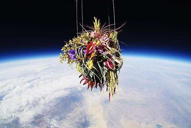 Flores no espaço 10 (Foto: Divulgação)