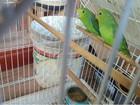 PF prende homem que mantinha 26 aves silvestres em cativeiro no DF