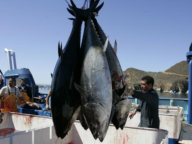 Atuns pescados na costa da Califórnia, em imagem de 2007 (Foto: AP Photo/Chris Park, Arquivo)