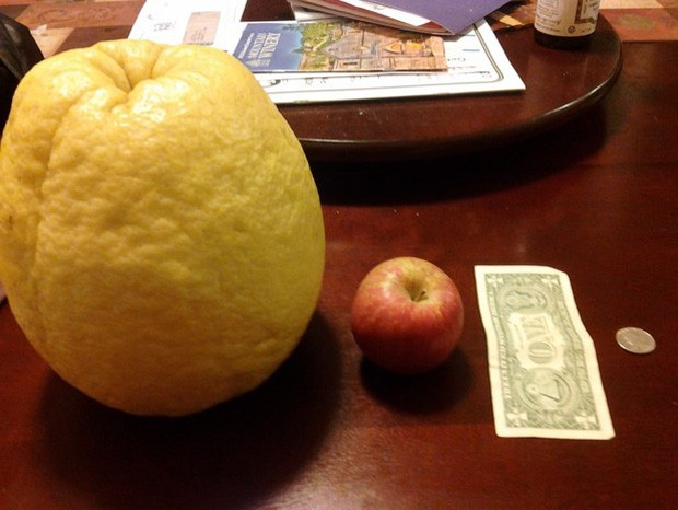 Fruta encontrada na Califórnia é muito maior em comparação a uma maçã comum (Foto: Reprodução)